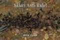 Safari Ants Rule!
