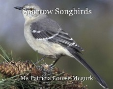 Sparrow Songbirds