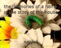 the memories of a home in the story of the house