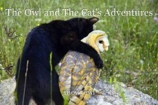The Owl and The Cat's Adventures