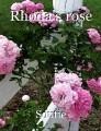 Rhoda's rose
