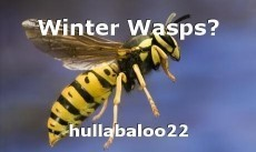 Winter Wasps?