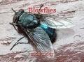 Blowflies