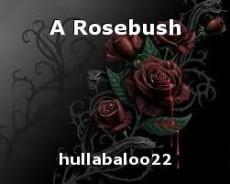 A Rosebush