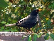 'my black bird song'