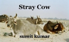 Stray Cow