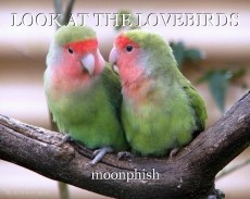 LOOK AT THE LOVEBIRDS