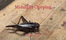 Midnight Chirping