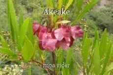 Akeake