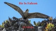 He Is Falcon
