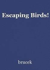 Escaping Birds!