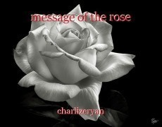 message of the rose