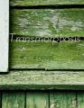 Transmorphosis