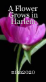 A Flower Grows in Harlem
