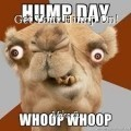 Get Your Hump On!