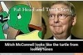 Fat Head and Turtle Boy