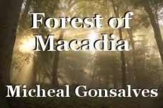 Forest of Macadia