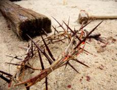 AdventistWheat.com: Crown of Thorns