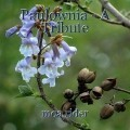 Paulownia - A Tribute