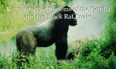 Reprosductive Systems of the Gorilla and the Black Rat Snake
