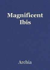 Magnificent Ibis