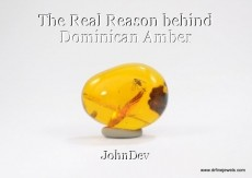 The Real Reason behind Dominican Amber