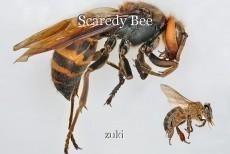Scaredy Bee