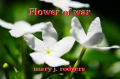 Flower of war