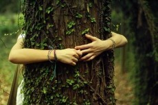 Beech Tree, Beech Tree