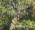 The Mangoes of Makumira