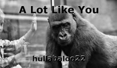 A Lot Like You