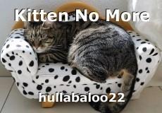 Kitten No More