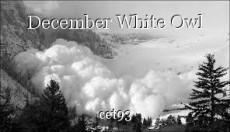 December White Owl