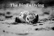 The Bird's Dying