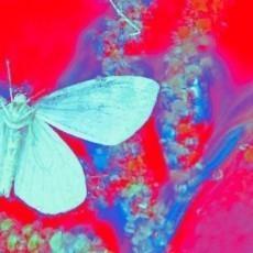 Butterflies in LOVE.