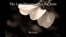 The Lost Flower under the Rain