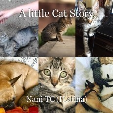 A little Cat Story
