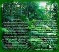 Our Rainforests