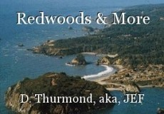 Redwoods & More