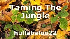 Taming The Jungle