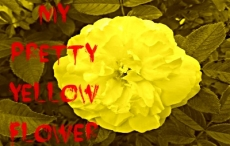 My Pretty Yellow Flower
