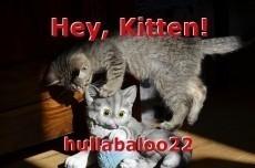 Hey, Kitten!