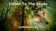 Listen To The Foxes