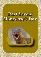Part 7: Mongoose's Day