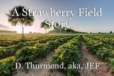 A Strawberry Field Story