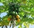Prize Papaya