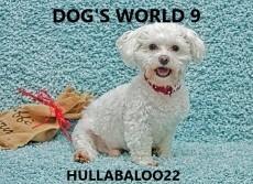 Dog's World 9