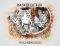 Basket Of Fur