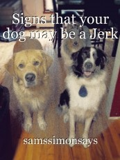 Signs that your dog may be a Jerk