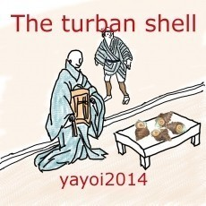 The turban shell
